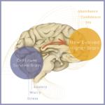 Higher Brain Living - Austin, Texas