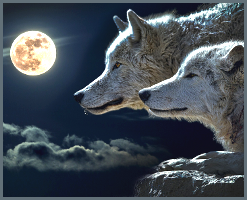 The Austin Alchemist Media Company offers body mind spirit news resources and events - shamanism - wolves full moon