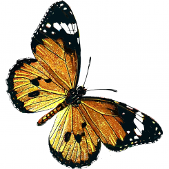The Austin Alchemist Media Company offers body mind spirit news resources and events - butterfly