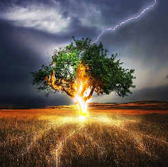 The Austin Alchemist Media Company offers body mind spirit news resources and events - lightning-tree