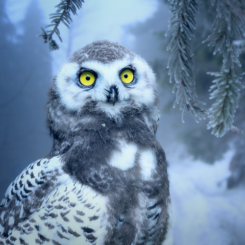 The Austin Alchemist Media Company offers body mind spirit news resources and events - owl winter snow