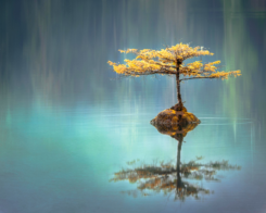 The Austin Alchemist Media Company offers body mind spirit news resources and events - Bonsai Tree Water Serenity